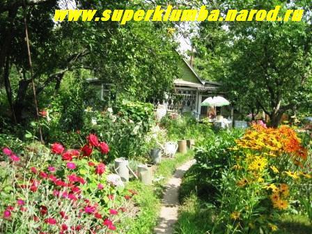 лето уже в разгаре, время цветов , грибов и ягод