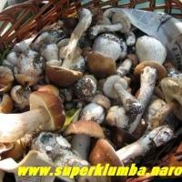 Вот и грибы пошли! Урожай 2006 года