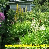 цветущий уголок  моего  сада