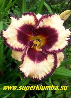 """Лилейник МУССАКА (Hemerocallis """"Moussaka"""") цветок кремовый  с пурпурным центром, и широкой рифлёной пурпурной каймой и зелёным горлом, диаметр до 15 см. Высота 55 см. НОВИНКА! ЦЕНА 500 руб ( 1 шт)"""