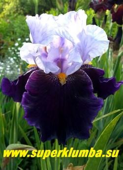 Ирис ХЭБИТ  (Iris  Habit) гофрированные контрастные цветы со светло-голубыми верхними  и лилово-черными нижними лепестками, бородка яркая оранжевая, выраженный сладкий аромат.  Средний срок цветения. Награды: НC-98, НМ-01, АМ-04 НОВИНКА! ЦЕНА 350 руб