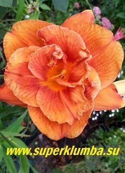 Лилейник МЭРИ БРАУН (Hemerocallis Mary Brown) Махровый цветок тёплого медно-красно-оранжевого цвета с кирпичным глазом и желтым горлом, лепестки гофрированы, диаметр цветка 14 см. Высота — 81 см. ЦЕНА 450 руб (1 шт). НЕТ НА ВЕСНУ