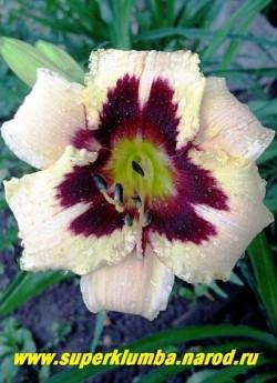 Лилейник МУНЛАЙТ МАСКАРАД (Hemerocallis Moonlight Masquerade) нежнокремовый с лимонным оттенком, вишневым глазом и зеленым горлом, крупные 14 см цветы. Цветет июль-август, высота 60 см,  ЦЕНА 350 руб (1 шт) НЕТ НА ВЕСНУ