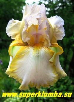 Ирис ШАРТРЕЗ РАФФЛЗ (Iris Chartreuse Ruffles) белый с ярко-лимонной окантовкой по краю нижних лепестков и нежной кружевной гофрировкой по краю, бородка желтая. Стандарты часто с легким лиловым оттенком. Среднего срока цветения, неприхотливый. Высота 80 см, ЦЕНА 200 руб