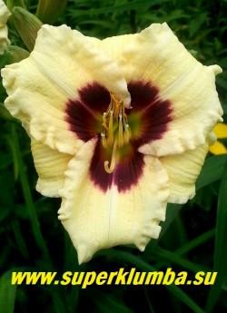 """Лилейник  СИЛОАМ ДУДЛБАГ (Hemerocallis Siloam Doodlebug)   светло-лимонно-желтый с очень контрастным черно-пурпурным глазом и зеленым горлом, края лепестков волнистые. Обильноцветущий  сорт с некрупными, но очень многочисленными словно  """"восковыми"""" цветами.  Высота 45см, диаметр цветка 6-7см.  Срок цветения средне-ранний. Награды: JC-85, НМ-89, FS-99 НОВИНКА! ЦЕНА 230 руб (1 шт)"""